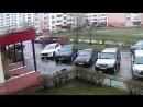 Кот пережил падение с 9 этажа на капот машины в Липецке