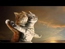 Cats Singing Song Titanic My Heart Will Go On