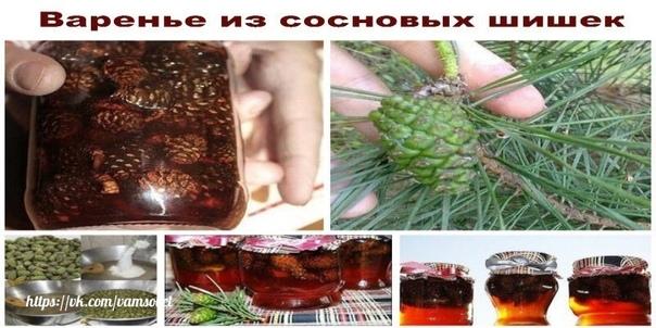 варенье из сосновых шишек — сосновый мед. сосна отдает нам самое ценное, что может быть использовано для лечения человека. это и живица, и почки, и хвоя, и сосновые шишки, которые широко используются в народной медицине.кроме того, иголки сосны