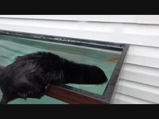 Episode 7- diving for aquarium fish _ black mamba_ born to hunt