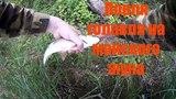 ловля голавля на майского жука р Ока Московская область