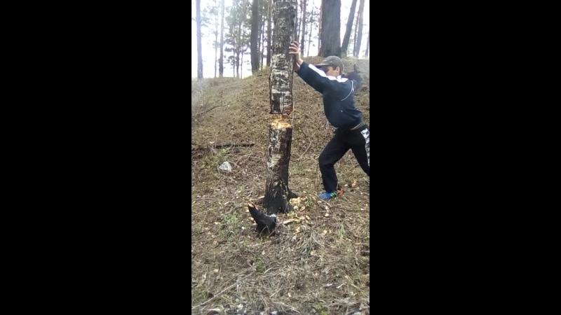 Рома рубит дерево!))