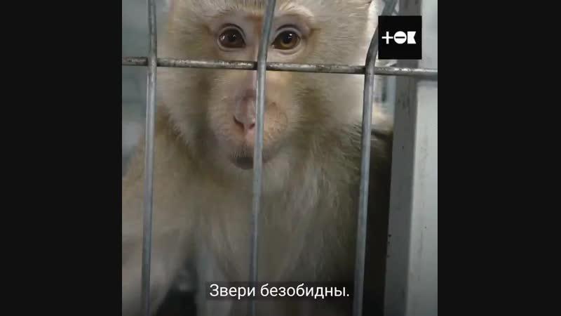 Арвидас управляет приютом диких животных под Москвой. Как правило, они попадают сюда после нелегального ввоза в Россию или после