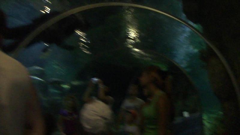 Сочи океанариум