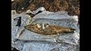 Приготовление пеленгаса в фольге на костре и бревенчатый парк в лесу