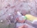 Примат шалит с осликом 2 Вот почему связь с чернильницей зоофилия