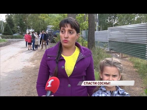 «Зеленый бунт» в Норском: жители просят не вырубать вековые сосны на месте строительства нового дома
