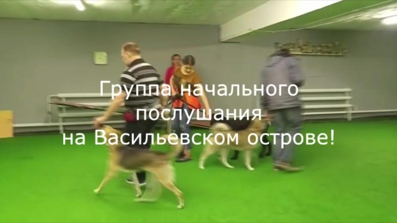 Курс начального послушания на Васильевском острове.