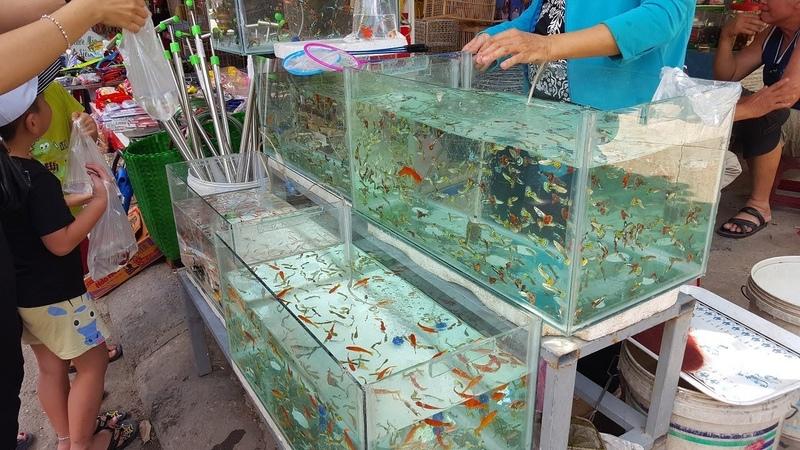 Sự thật thú vị về chợ bán các loài cá cảnh rẻ đẹp độc đáo