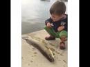 Рыбье кун-фу