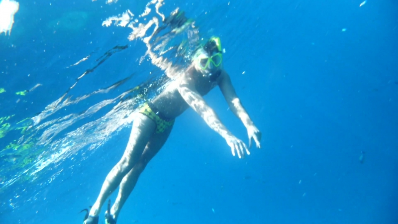 Плавание с огромными морскими черепахами.