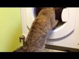 Смешные кошки приколы про кошек и котов 2017 #31 (Смех продлевает жизнь)