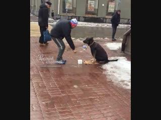Собака-попрошайка в жилетке 18.11.2018 Ростов-на-Дону Главный