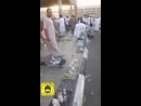 جولة في حراج الطيور والحبحب في حلقة الخضار بالمدينة المنورة مع الأستاذ محمد الريس