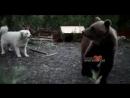 В Норильске встретили медведя