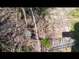 Змеиный клубок в районе госпиталя  Ростов на Дону