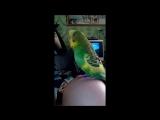 Мой попугай Кеша