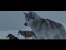 """Отрывок из фильма """"Белый Плен"""" (2006) \ Битва собак с тюленем-леопардом"""