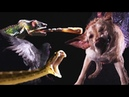 Animals In Slow Motion | Earth Unplugged