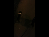 Вечерняя прогулка 😊 мои инопланетяне 😍🐾