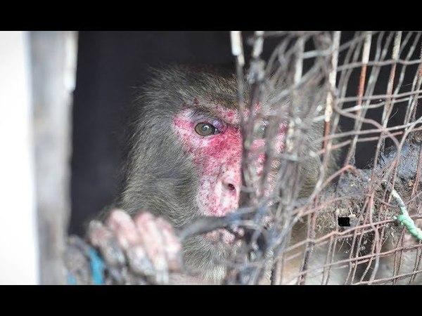Из зловонной тесной клетки к приехавшим волонтерам тянул лапы обездоленный пленник