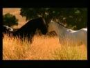 Красивая музыка о нежности и любви Арабатский конь