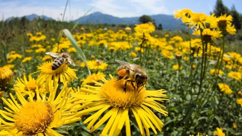 Больше чем мёд 2012 More Than Honey 2012
