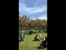 Черешневый сад в Сочи! 2018 год