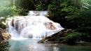 Шум Водопада и Пение Птиц для Сна Детей Белый Шум для Детей