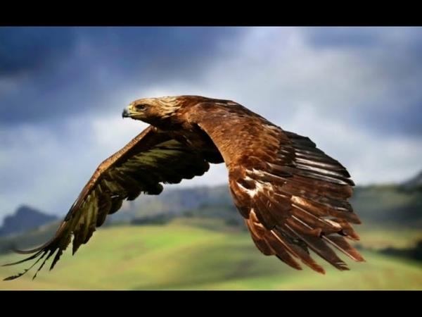 не пара орлу перелетные птицы.....