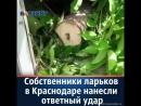 Война продолжается Собственники ларьков в Краснодаре наносят ответный удар
