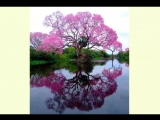 вылечись_за_1_день__кора_муравьиного_дерева_натуральный_продукт_.kcoxl