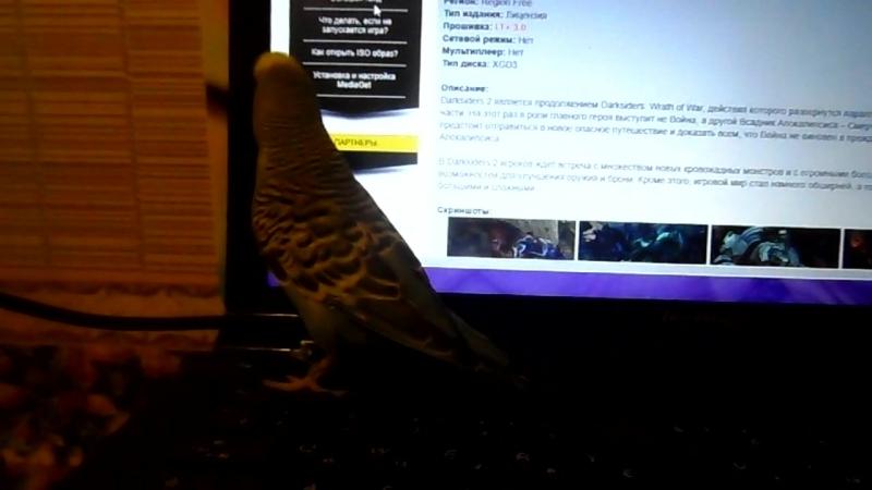 Семён птичка какашка