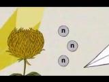 Kelley Polar - Chrysanthemum