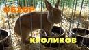 Чешская выставка кроликов / Проведение, продажа крольчат