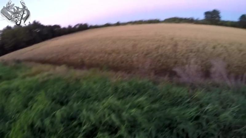 Стрельнул двух подсвинков на поле