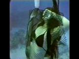 Aquafans - Never Dive Alone