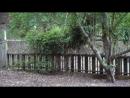 Бэмби в сиквоевом лесу.