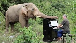 ★ Мужчина играет классическую музыку, чтобы помочь слепым слонам