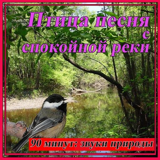 Звуки Природы альбом Птица песня с спокойной реки: звуки природы