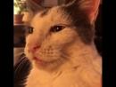 Как переключить кота из грустного режима в придурковато счастливый