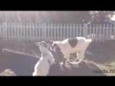 Самые смешные ПРИКОЛЫ С ЛОШАДЬМИ, Смешные лошади Funny horse @