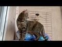 Кошка пытался открыть дверь !!