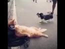 Кот балдежник хорошее настроение, любительская съемка, кошка отдыхает, забил на все, собака лает, ругается на кошку, улица.