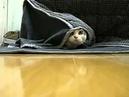 кот спрятался прикол