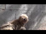 Спасение страшно напуганного пса