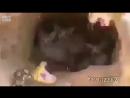 Спасли котиков