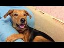 1 год из жизни собаки
