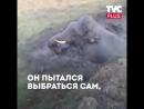 Этот слонёнок просидел в яме всю ночь