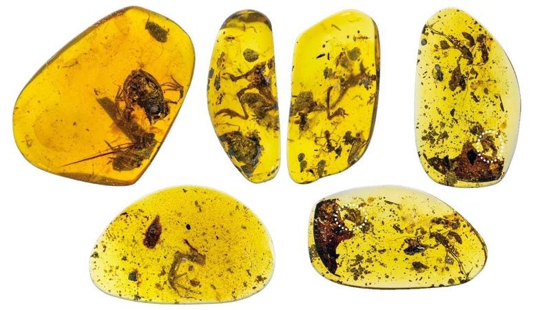 Лягушки из бирманского янтаря мелового периода Палеонтология Мьянмы